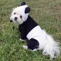 Panda Bear Pet Halloween Costume for Dogs by LittleDogFashion