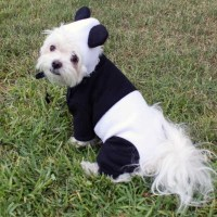 Panda Bear Pet Halloween Costume for Dogs by LittleDogFashion