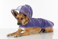 Dog Raincoat Purple Rainbow Line