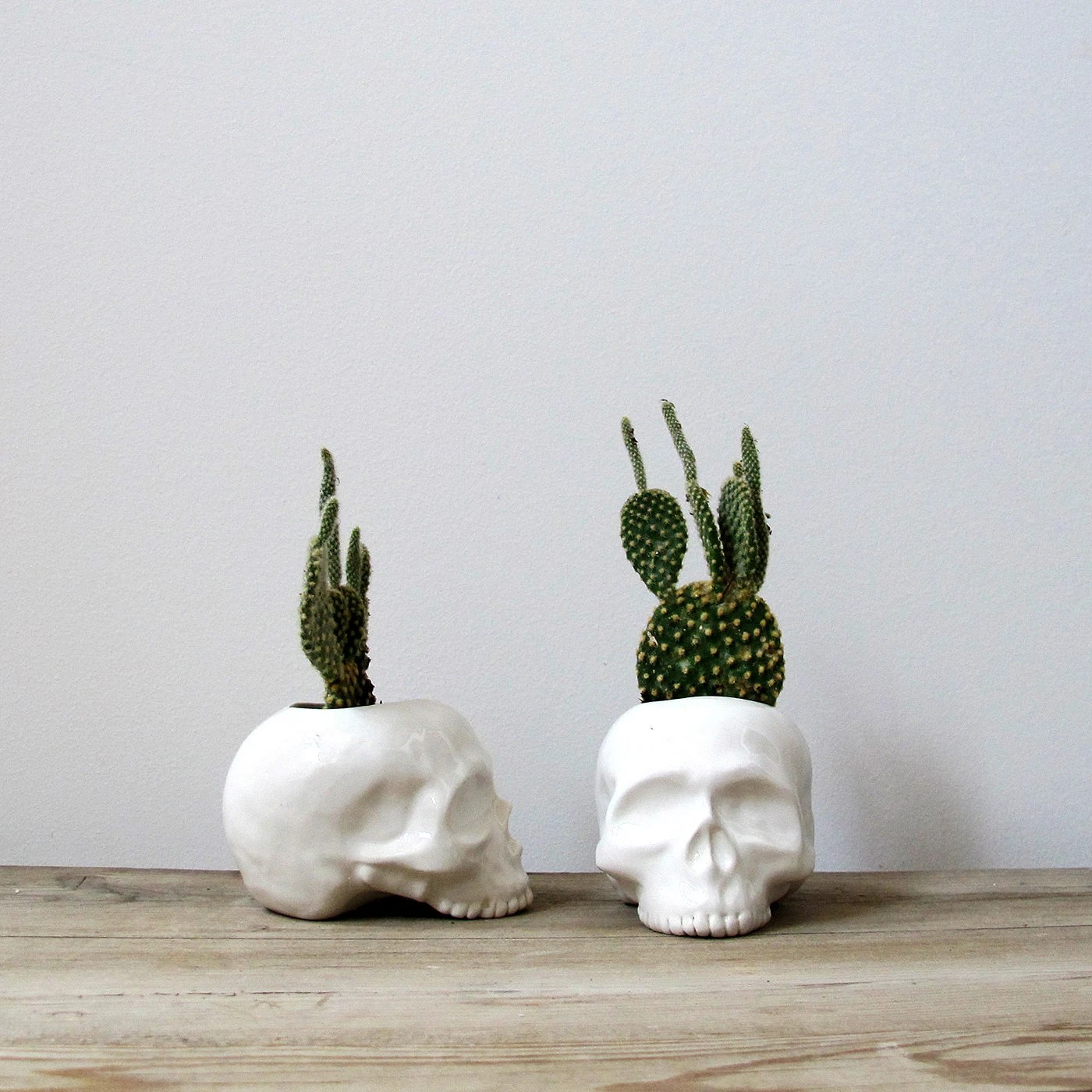 Cactus Planters Pottery Ceramic Skull Planter Perfect For Cactus Succulent Or Air