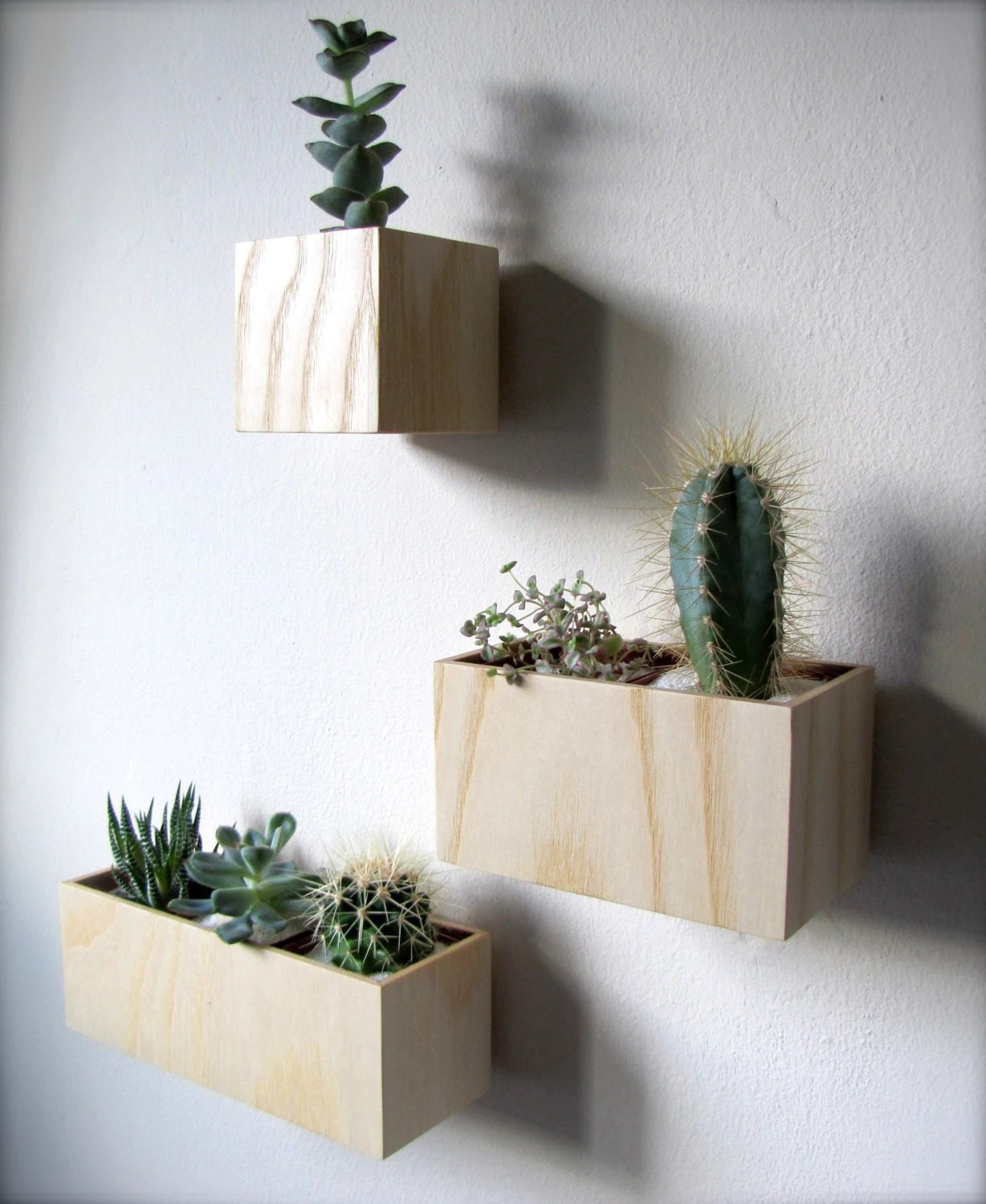 Indoor Wall Mounted Plant Holders Clearance Set Of Three Wall Hanging Planters In Ash Wood