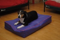 Waterproof Bed Cover Incontinence Beds Dog Bed Cat Bed