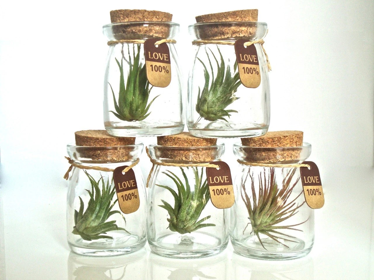 Luftpflanzen Kaufen Items Similar To Sale Five 100% Love Cute Little Air Plant