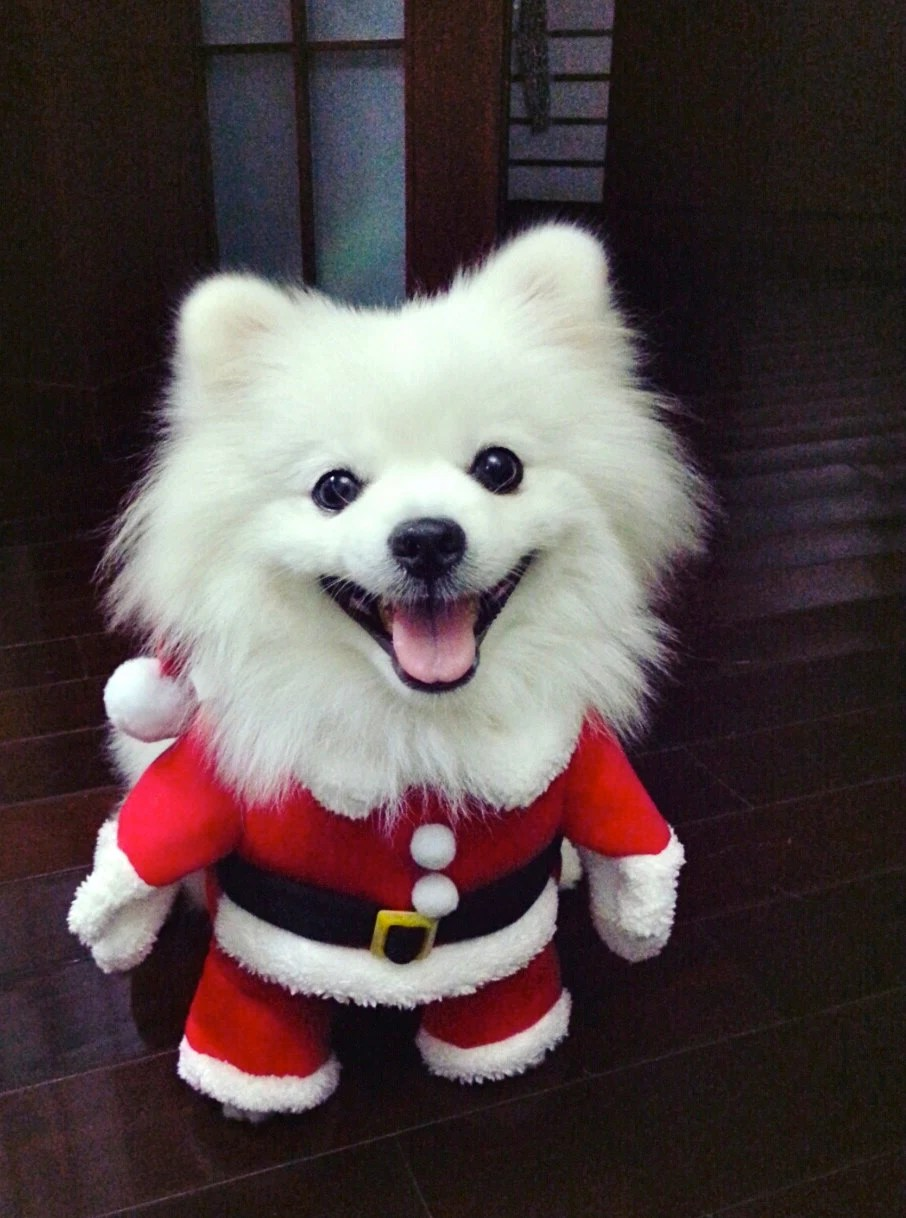Dog costume Santa Claus by LovebirdDesign on Etsy