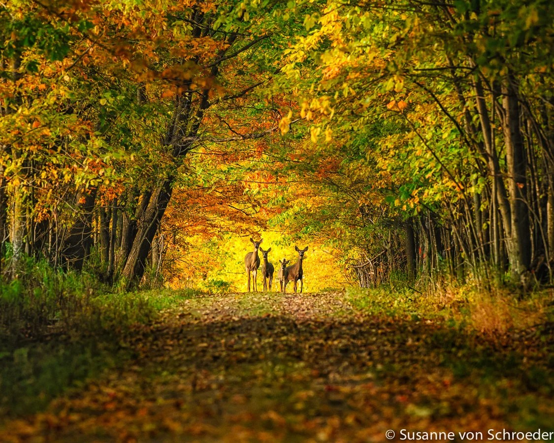 Create Name Animation Wallpaper Magical Woodland Fall Colors Deer Family Enchanted Forest