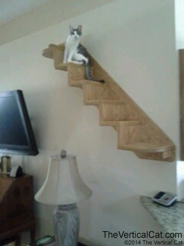 6 Step Cat Stair From The Vertical Cat