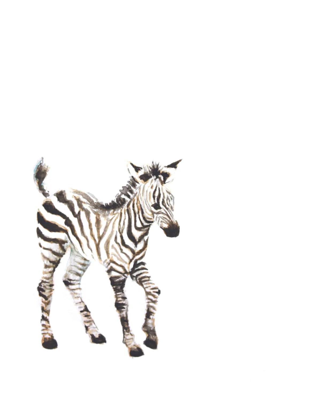 Baby Girl Nursery Wallpaper Borders Baby Zebra Watercolor Print Animal Painting Safari Animal