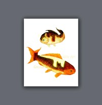 Asian Art decor print Japanese carp Koi Fish Wall Art Print