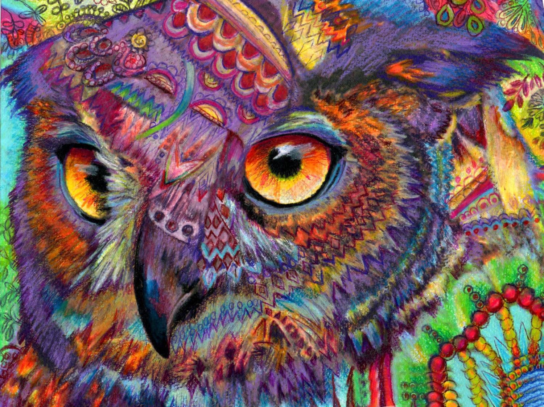 Cute Owl Cartoon Wallpaper Original Art Drawing 16x20 Owl Concentration Colorful Owl