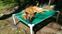 Elevated Bed Dog Bed Outside Beds Kennel Beds Cat Bed