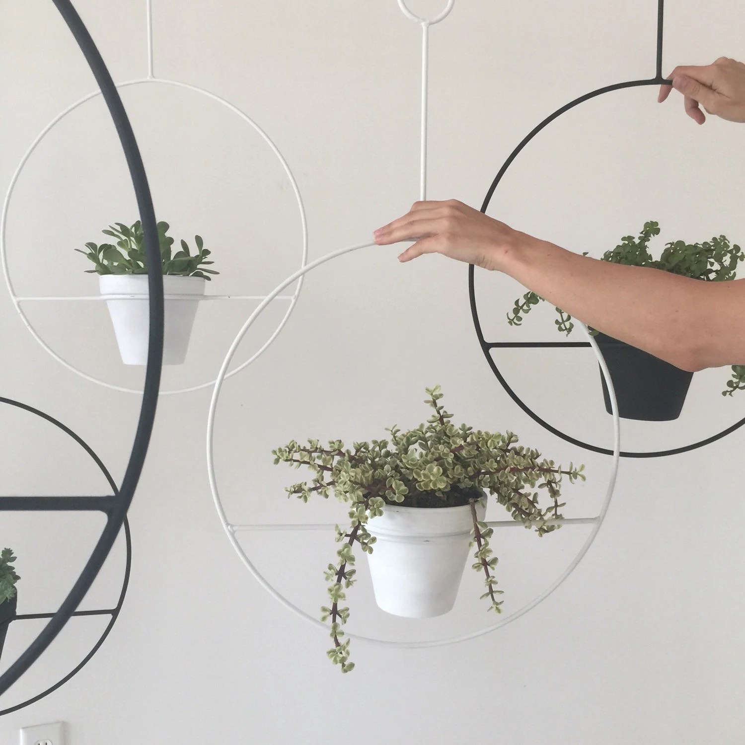 Indoor Wall Mounted Plant Holders Item Details