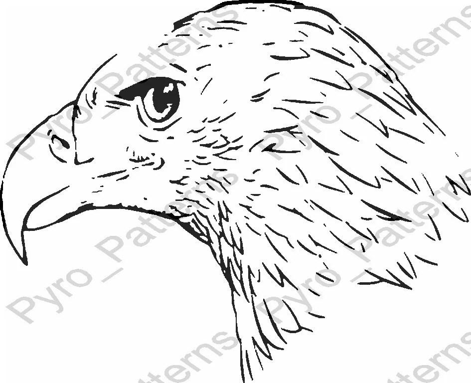 Pyrography Wood Burning Bald Eagle Head Bird Pattern Printable