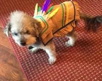 Items similar to Harry Pawter Dog Costume ALL SIZES ...