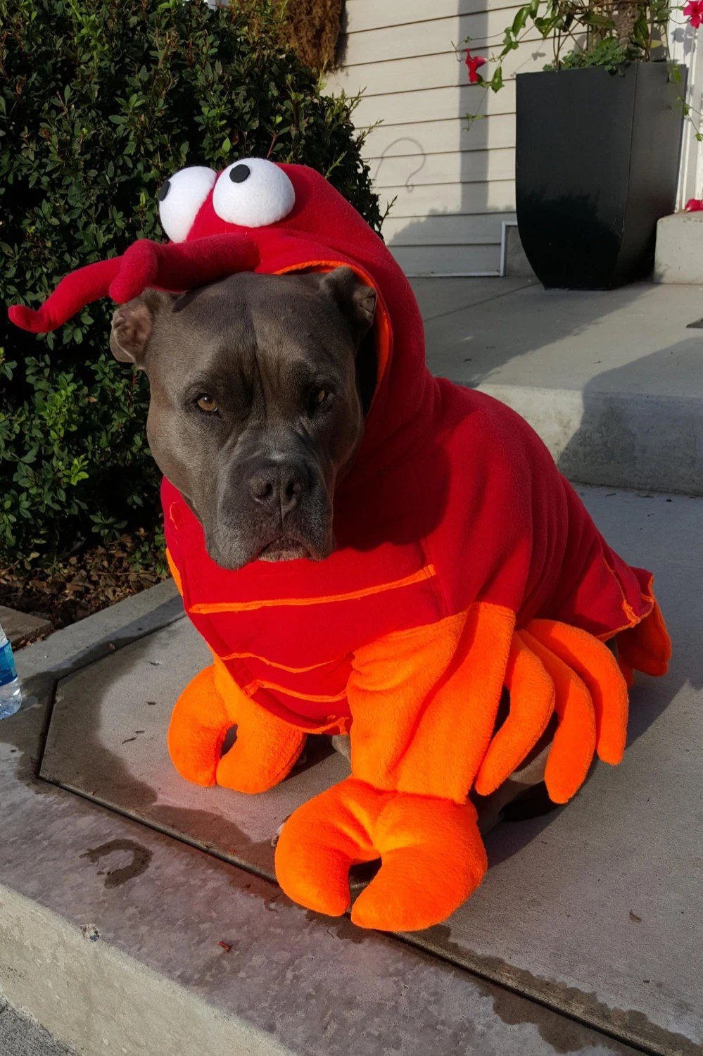 Lobster Costume for Dog X Large