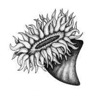 Anemone Di Mare Da Colorare