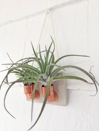 Copper Cement Double Air Plant Holder Air Plant Wall