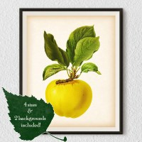 Kitchen wall art Fruit poster Botanical print vintage Apple