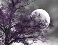 Black White Purple Wall Art
