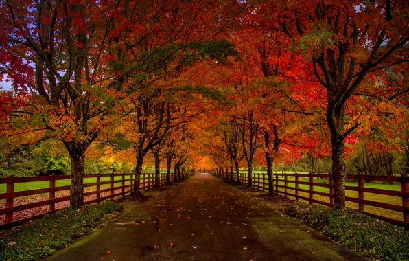 Fall Pumpkin Iphone Wallpaper Wallpaper Road Autumn Forest Leaves Trees Nature