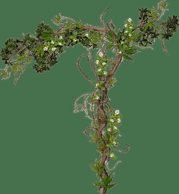 Rose Flower Wallpaper Hd Free Download Climbing Plant Picmix