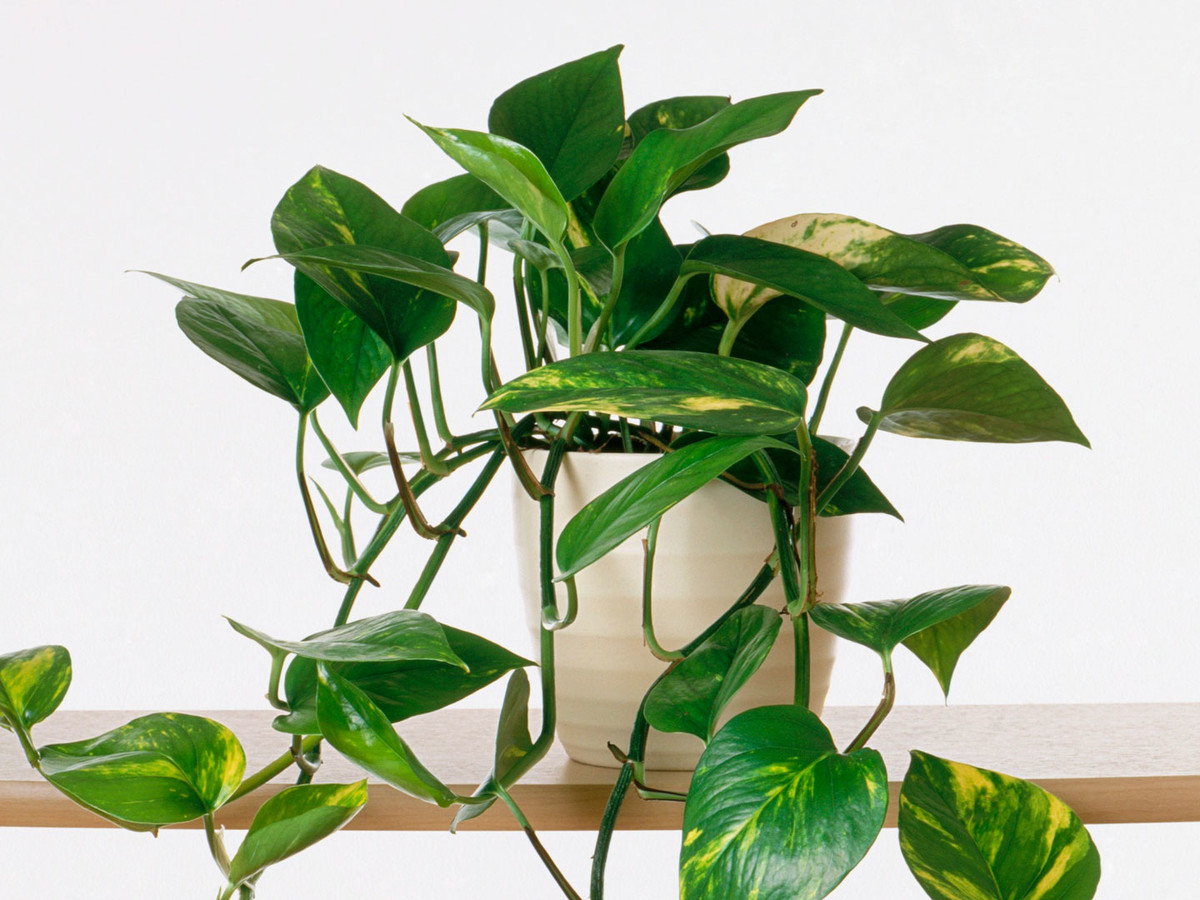 How To Plant Indoor Plants Indoor Gardening House Plants Guide Southern Living