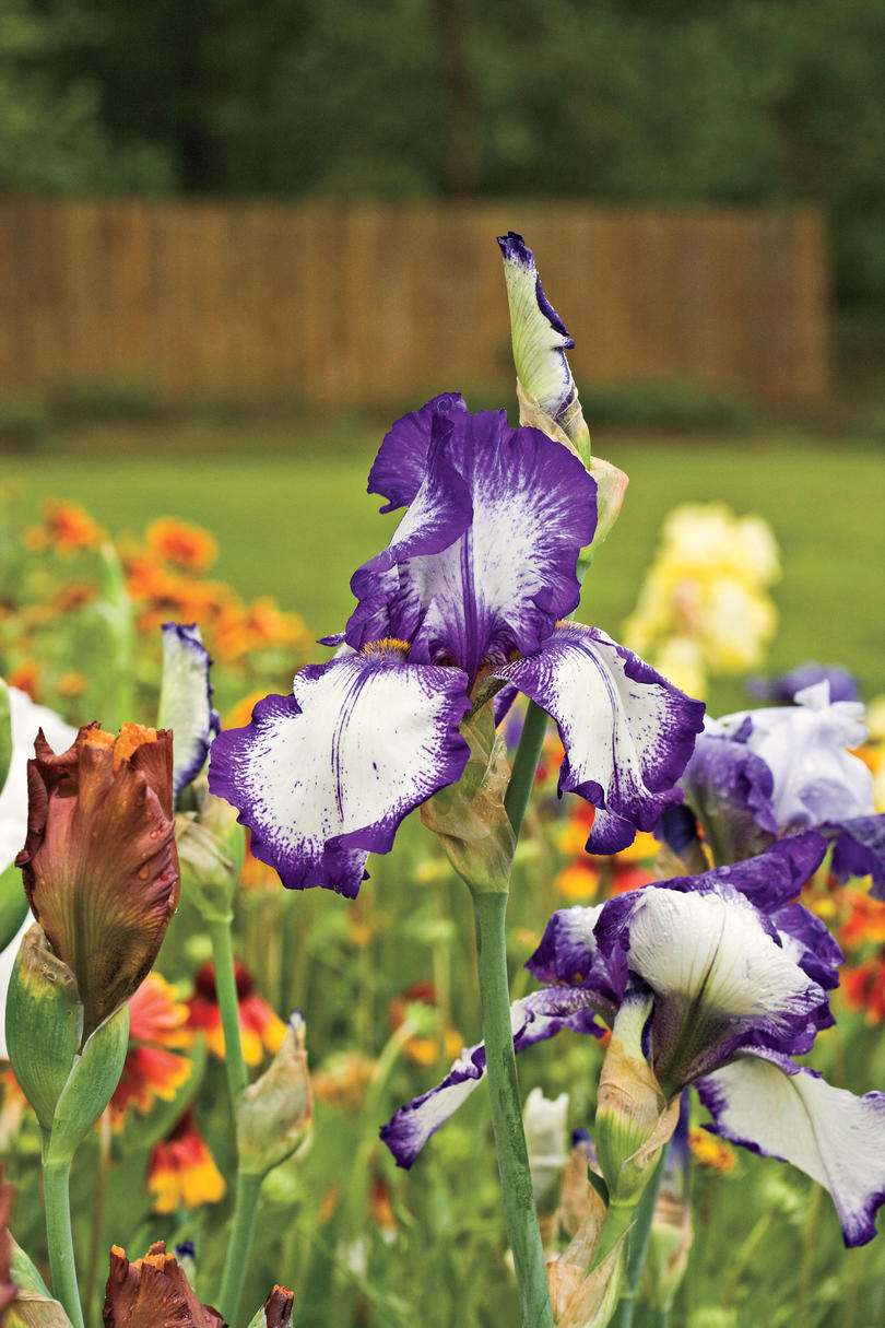 State Flowers Enjoy Color Landscaping Ideas Sourn Living Landscaping Ideas Big Stones Landscaping Ideas Flowers outdoor Landscaping With Flowers Ideas