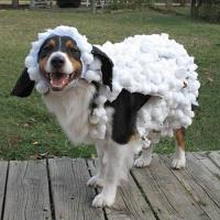 Pet Halloween Costume Contest - Southern Living