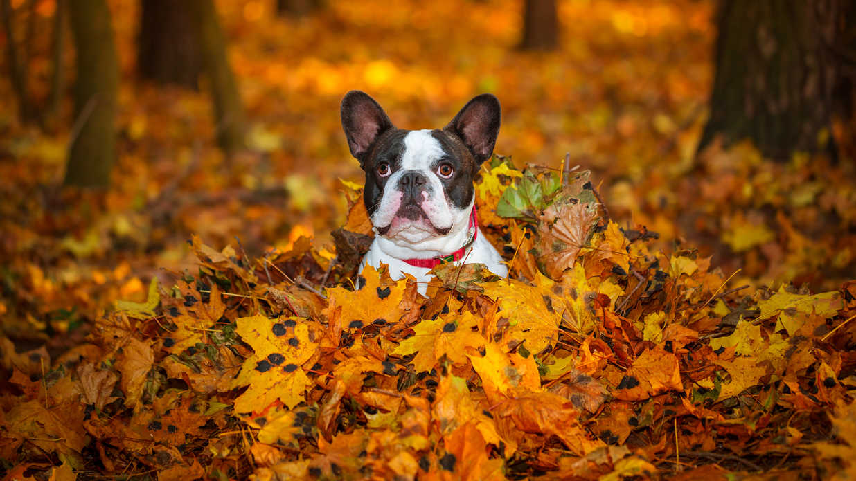 Cute Wallpapers Of Grumpy Cat Cute Puppies Enjoy Fall Southern Living