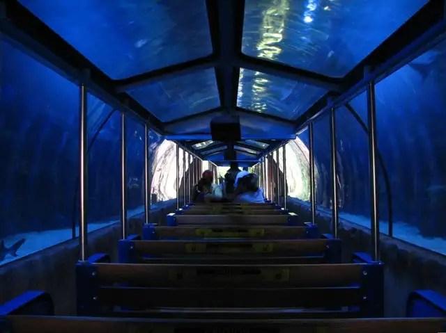 Downtown Aquarium Houston Tx Photos