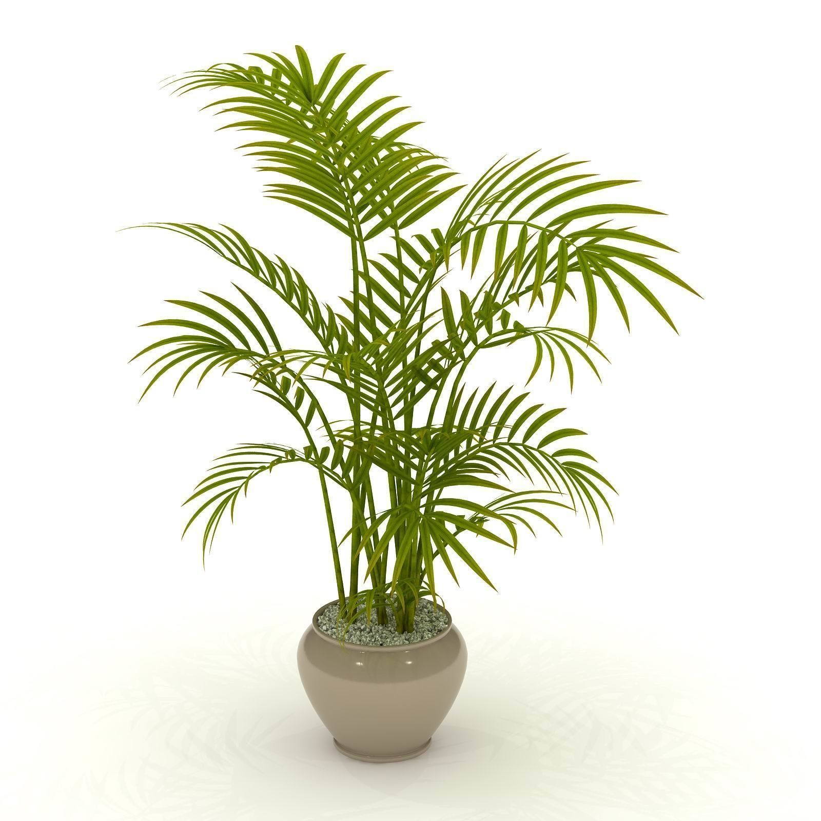 Artificial Areca Palm Tree Potted Plants Artificial Chrysalidocarpus Lutescens Bonsai Synthetic Indoor Coconut Tree Buy Artificial Chrysalidocarpus Date Palm Bonsai Best Bonsai Images 2018