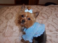 Free Knitted Dog Sweater Patterns - Hot Girls Wallpaper
