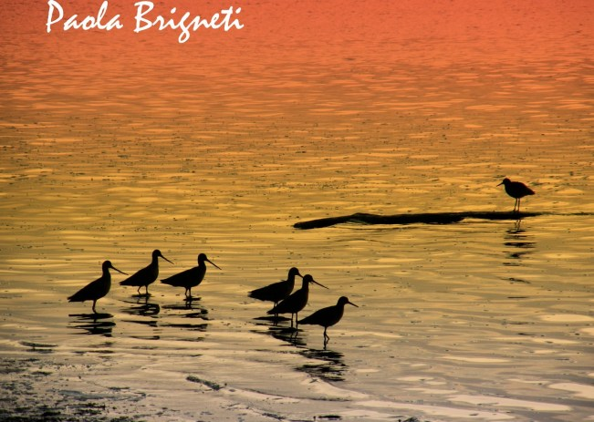 Nature Photography Orange Birds at Sunset in Morro Bay California