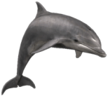 Bottlenose Dolphin Scientific Name