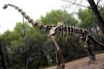 Brachiosaurus Esqueleto