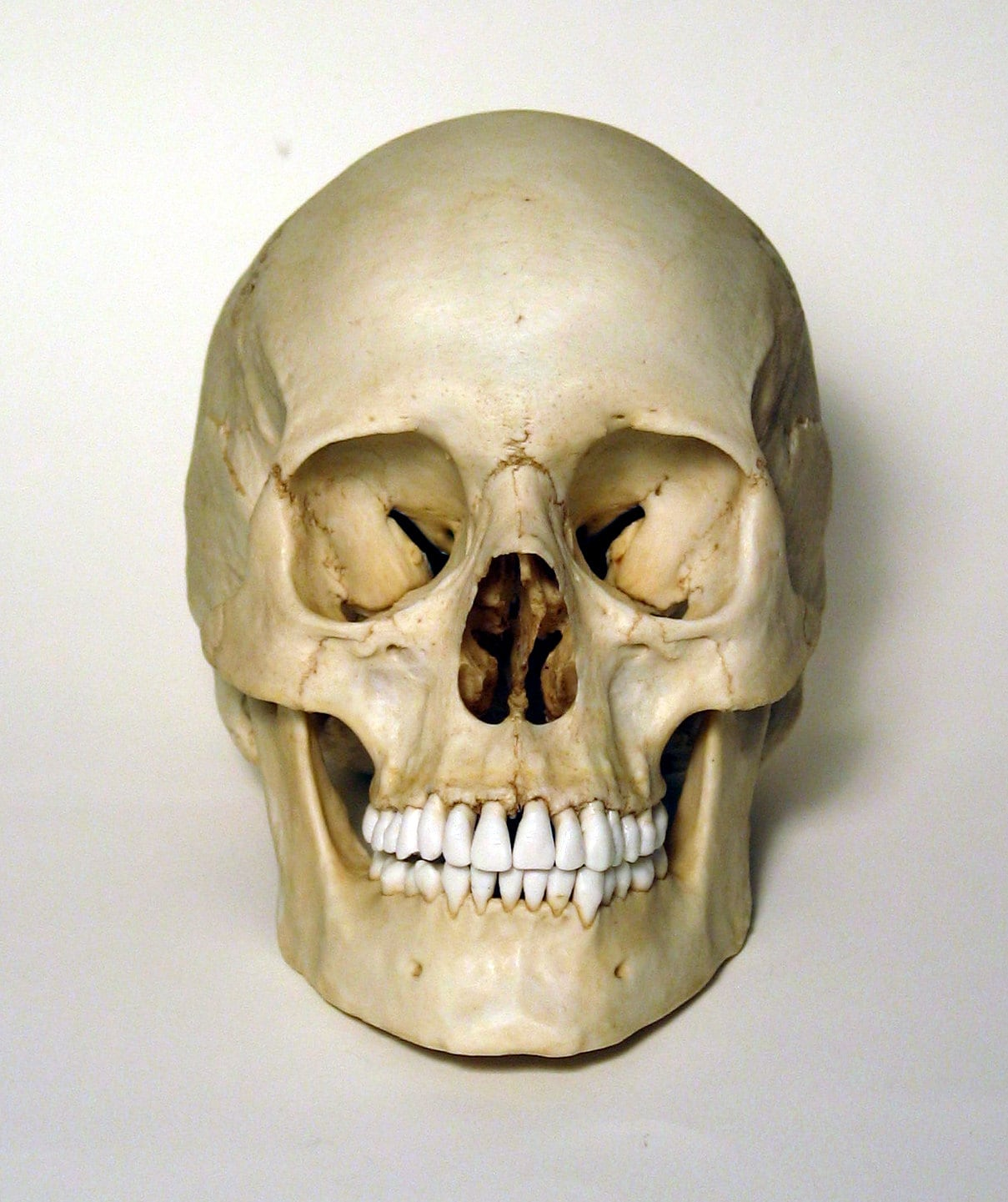 Human Skull Human Skull Driverlayer Search Engine