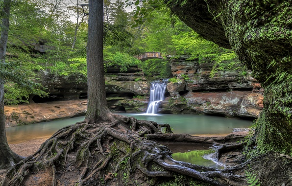 Fall Wallpaper For Tablet Wallpaper Forest Trees Bridge Roots Lake Waterfall