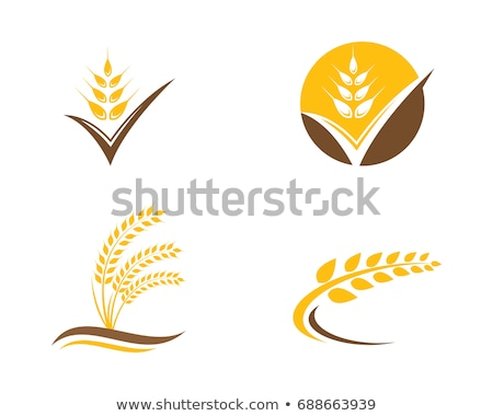 wheat Logo Template vector illustration © dar woto (Ggs) (#7539829 - wheat template