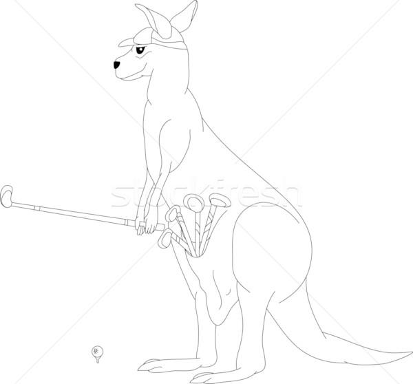 grey kangaroo diagram