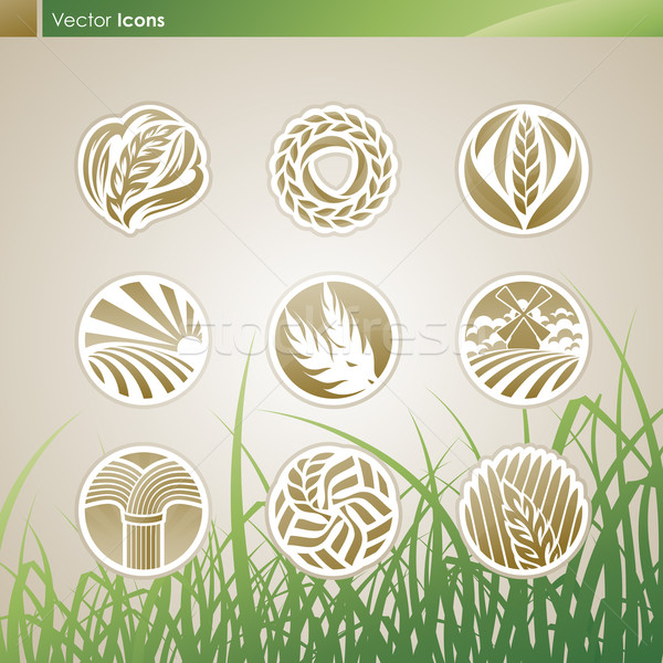 Wheat and rye Vector logo template set Elements for design Ic - wheat template