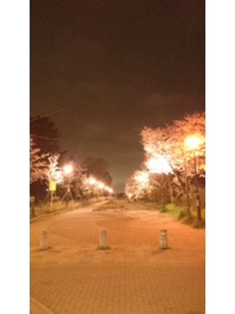 清水公園☆夜桜☆_20160405_2