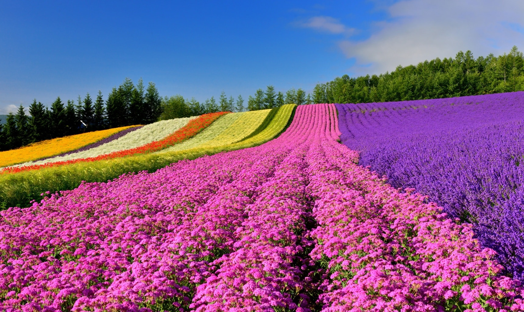 Animated Wallpaper Windows 8 8 Must See Flower Spots In Hokkaido All About Japan