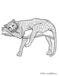 Ausmalbilder Tiere Panther Ausmalbilder Ausmalbilder Black