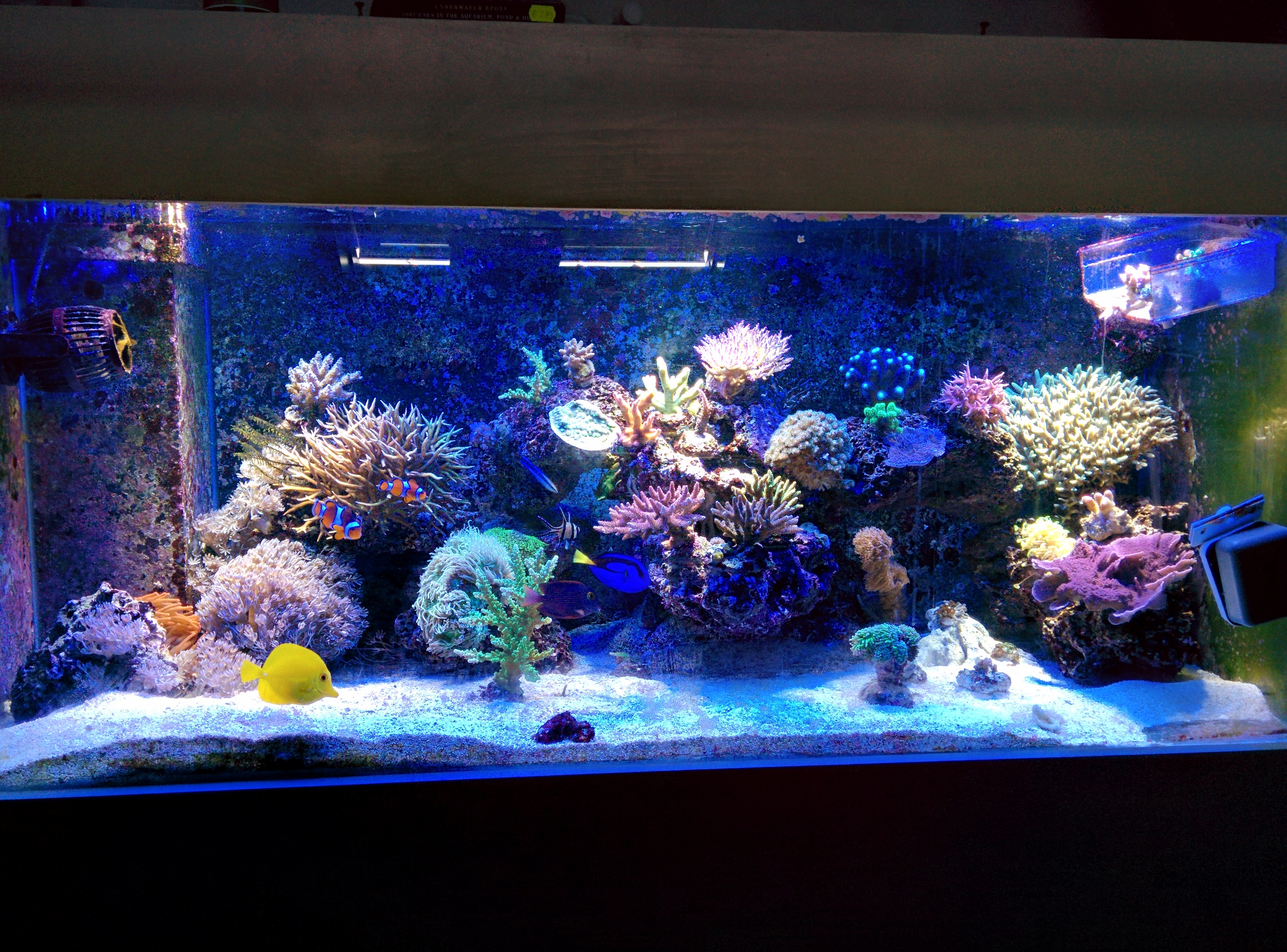 Nano Zee Aquarium Verlichting Mini Fred 400 Liter Zee Bak