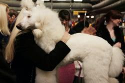 Multipurpose Order Most Loyal Dog Breeds Pitbull Friendliest Dog Breeds That You Should Consider Adopting If You Likecuddles Friendliest Dog Breeds That You Should Consider Adopting If Most Loyal Dog