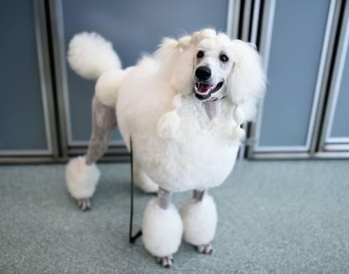 Medium Of Mellow Dog Breeds