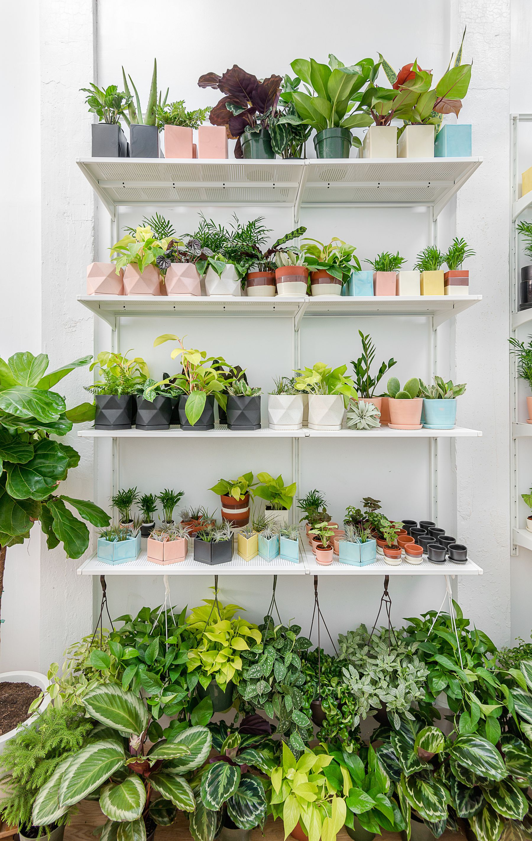 Unusual House Plants For Sale The 10 Best Plant Shops In Nyc 6sqft
