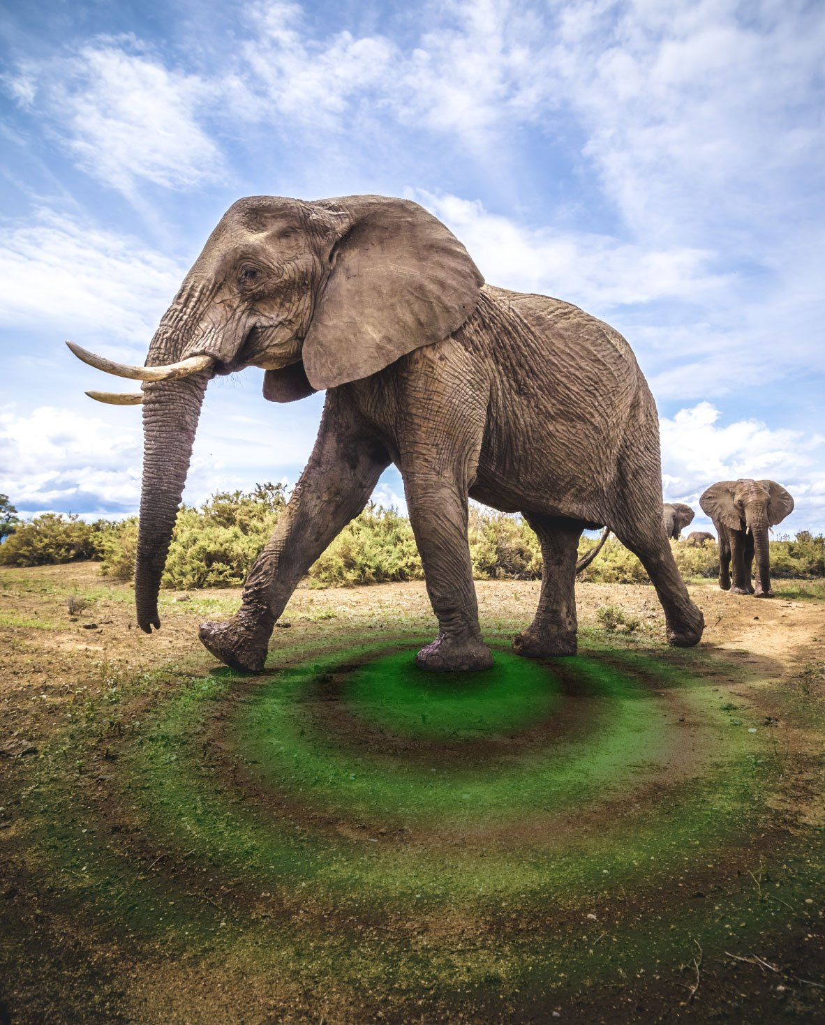 Photos éléphants Vibrations From Elephant Calls And Movements Reflect Distinct