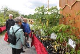Jaesch- Pflanzenverkauf 1