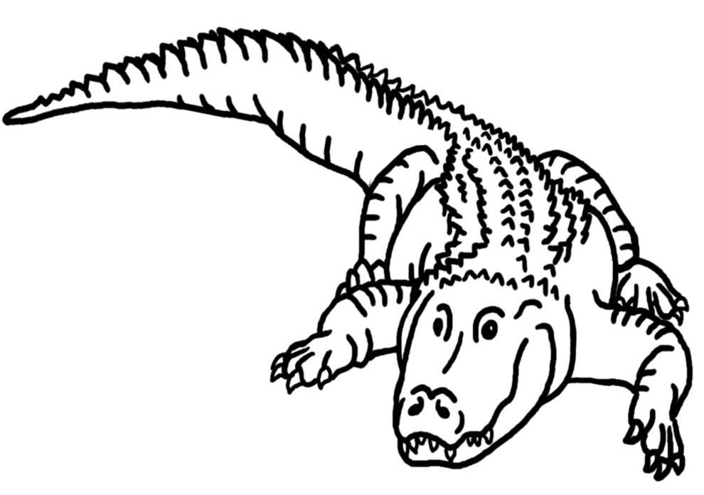 Stampa Disegno Di Il Coccodrillo Da Colorare