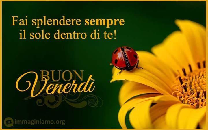 Sunflower Wallpaper Desktop Quote Immagini Buon Venerd 236 Immaginiamo Org